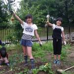 畑プロジェクト6月9日の様子