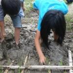 畑プロジェクト6月2日の様子