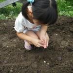 畑プロジェクト6月22日の様子