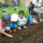 畑プロジェクト7月13日の様子