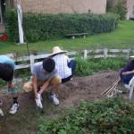 畑プロジェクト8月31日の様子