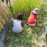 畑プロジェクト10月12日の様子