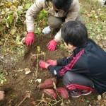 畑プロジェクト11月30日の様子