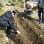 畑プロジェクト2月1日の様子