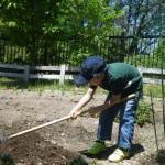 畑プロジェクト5月17日の様子